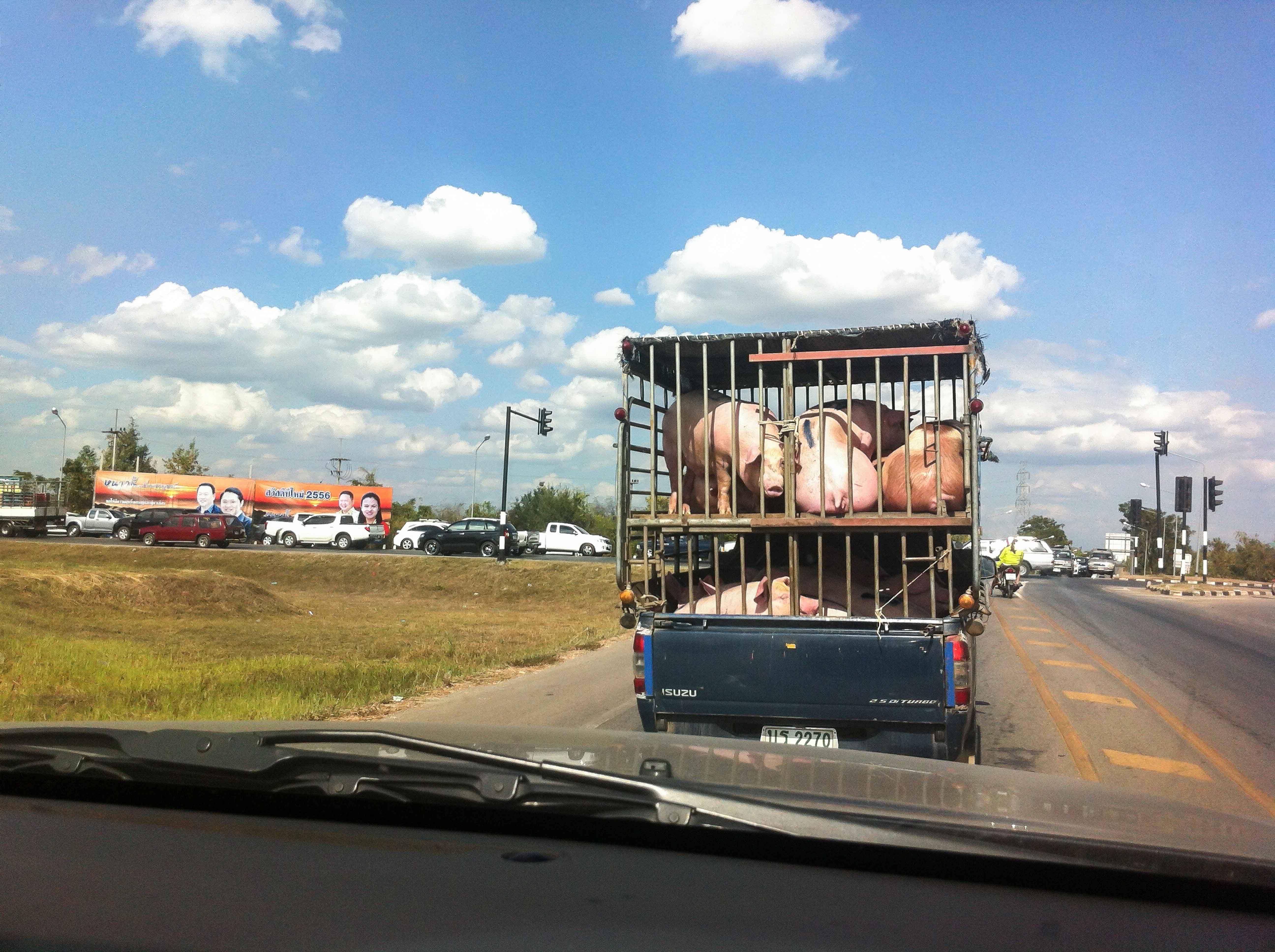 Camión con animales