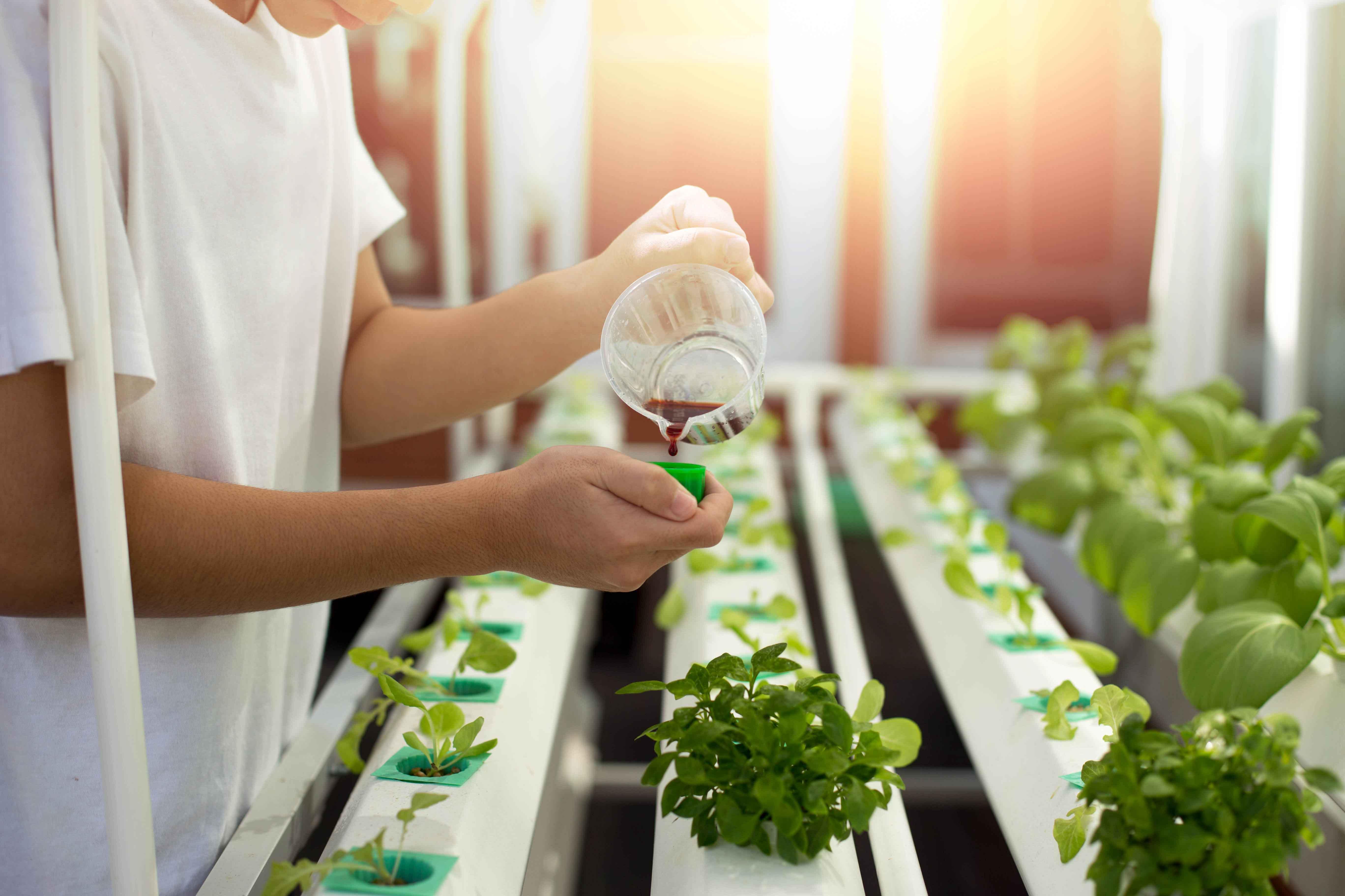 Chica abonando plantas de invernadero con fertilizante