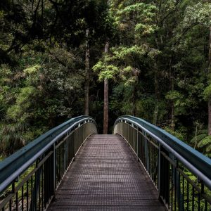 Bosque con puente de paso en medio