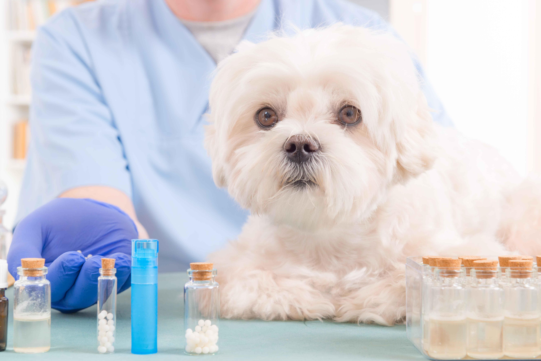Perro con veterinaria de fondo junto a pastillas naturales