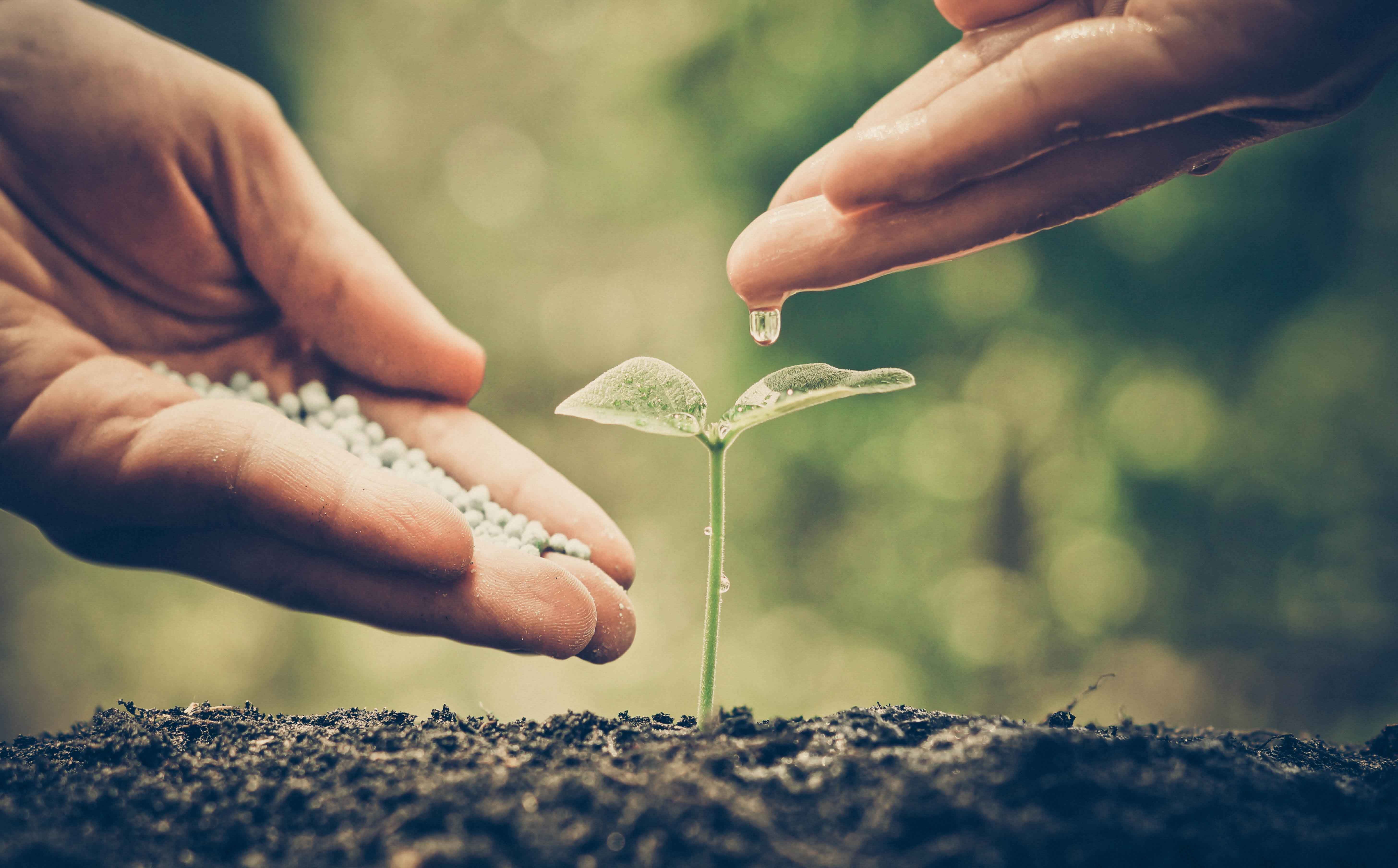 Mano humana junto a planta recién nacida