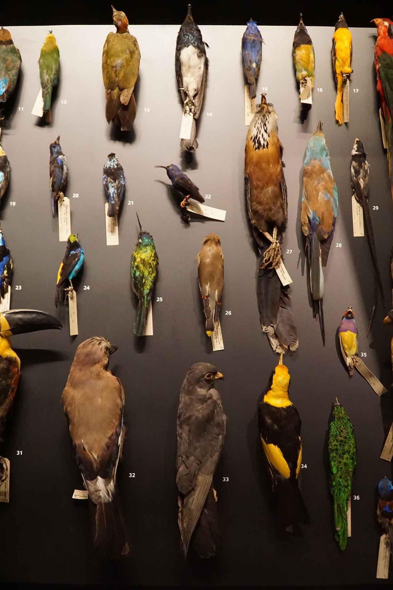 panel de aves disecadas
